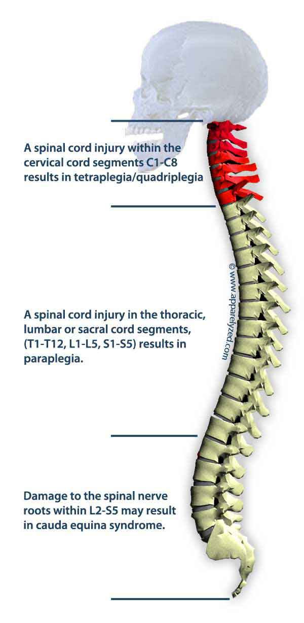 Spine anatomy numbers 7072291 - follow4more.info
